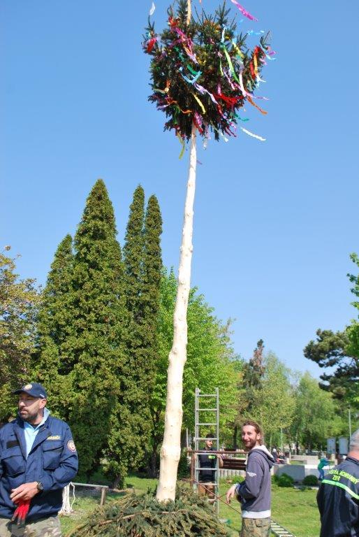 Miestny spolok dobrovoľných hasičov pripravil a klasickým spôsobom (bez  pomoci mechanizmov) vztýčili tradičný strom Máj. 6d423ffc235